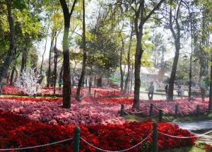 garden flower chiang rai, thailand