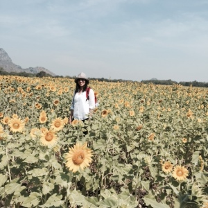 Lopburi sunflower, Thailand
