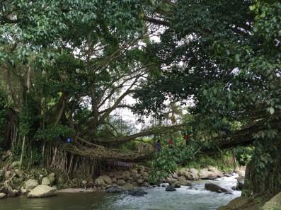 jembatan akar 2